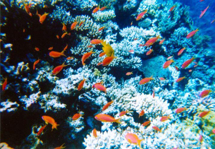 ブルーホールの熱帯魚