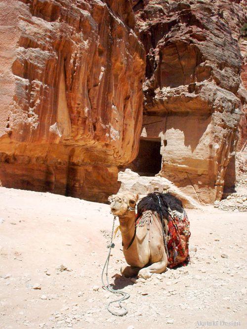 ペトラの遺跡前で休むラクダ