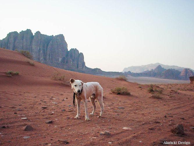 砂漠にたたずむ犬