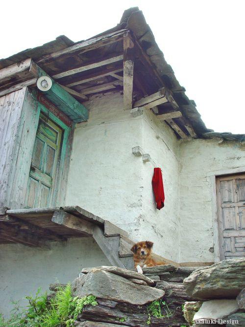 カダランの犬