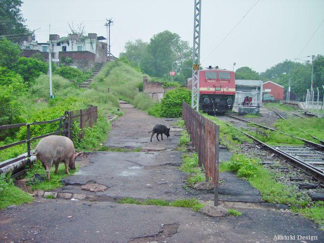 インド・カルカの写真