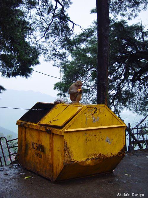 ゴミ箱とサル
