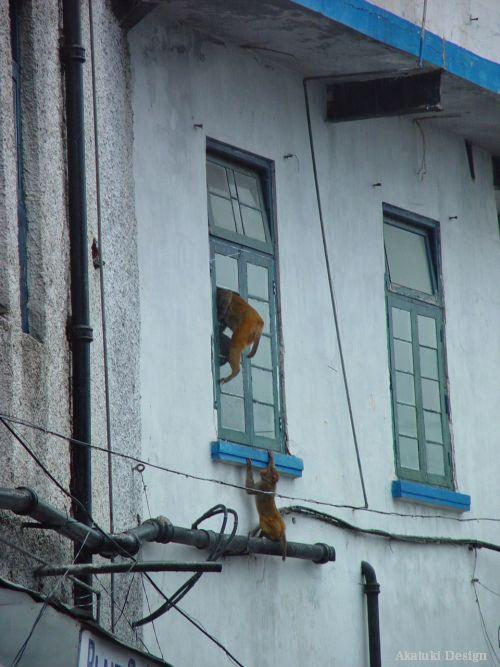 サルが家に侵入