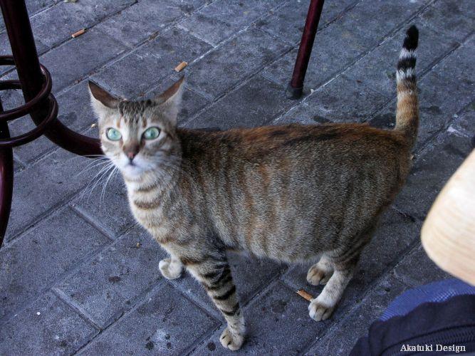 タンジェの野良猫
