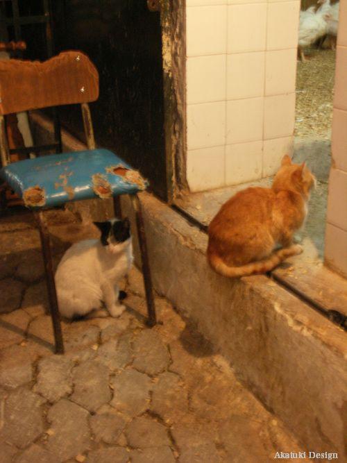 スークで暮らす猫たち